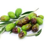 Nachtkerzenpflanze, Oliven mit Zweigen und Minzblätter auf weißem Hintergrund