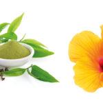 Große Klette, Grüner Tee, Hibiskusblüte und Gurke auf weißem Hintergrund